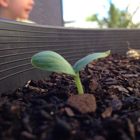 Grow little one